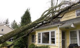 Stump and Tree Removal St. Louis Missouri