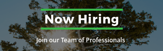 Tree Service Now Hiring