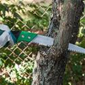 Structural Pruning – Preventative Tree Care