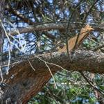 The Importance of Assessing Your Trees After a Recent Storm