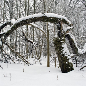 Common Winter Time Tree Damages & Preventative Measures You Can Take