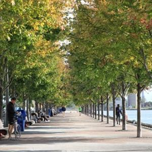 Urban Forests Provide Multiple Benefits