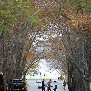 Street Trees Reduce Heat in Cities