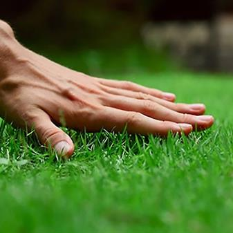 Fall Lawn Care - October and November Tips