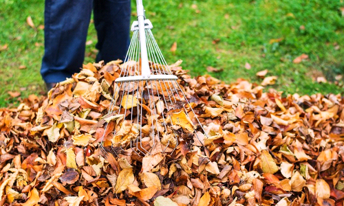 What to Do When Leaves Fall in Your Garden