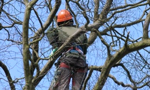 What Does it Mean to be an Arborist?