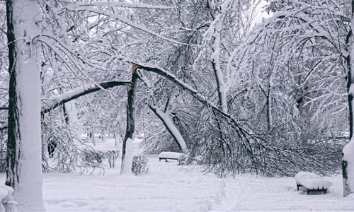 Will Your Trees Be Able to Withstand Winter Storms?