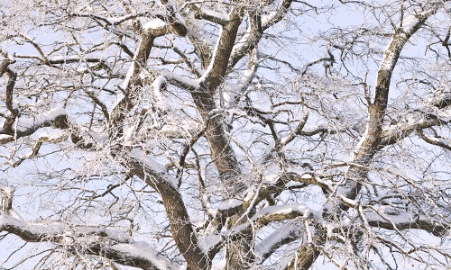 What are Some Benefits to Pruning Your Trees in the Winter?